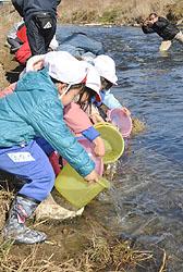 サケの稚魚1万匹を広瀬、石田川に放流