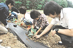 親子で協力し苗植え 農業に理解深める食育教育