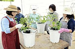 生徒講師で開放講座 磐城農高生、園芸のこつ指導