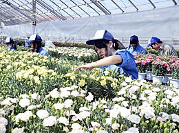 「母の日の花」準備着々 相馬農高で5月6日販売