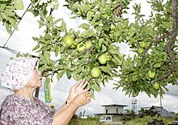 歌謡編−(7)リンゴの唄、会いたかった